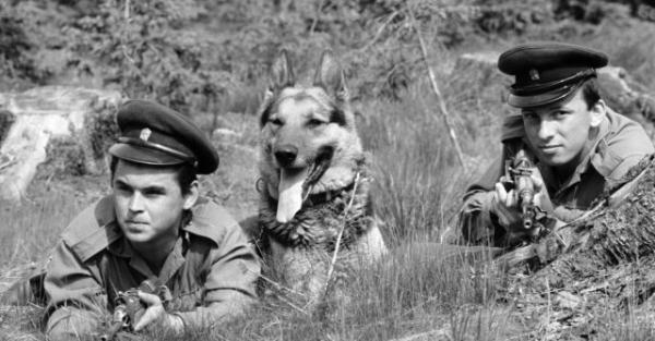 Historie služební kynologie - psi ve službě